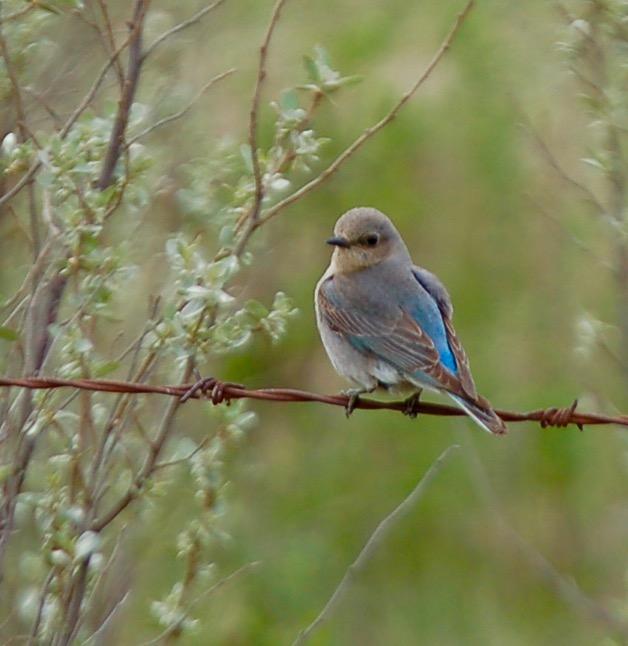 Birds Sarilia