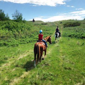 Sarilia horses